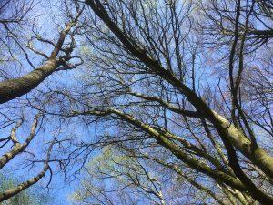 Die Bäume schlagen aus am 1. Mai