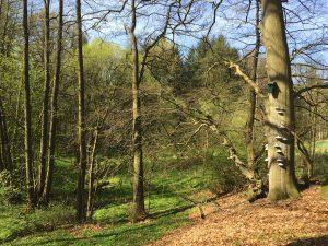 Natur in Wittenborn